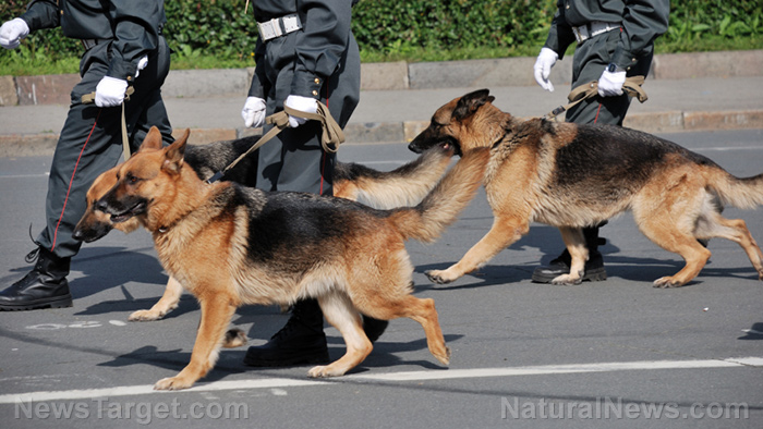 """Image: Media says dogs can sniff covid on a person – can they also identify vaccinated people who are """"shedding?"""""""