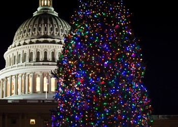 Capitol Christmas Tree 2010