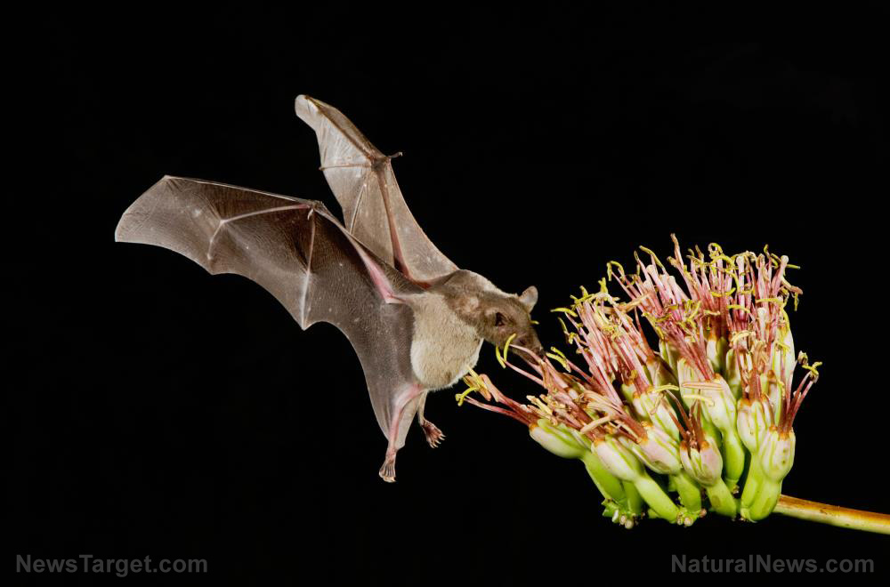 """Image: EXPOSED: Wuhan scientists planned to use """"skin-penetrating nanoparticles"""" to unleash """"chimeric covid spike proteins"""" into bats in China"""