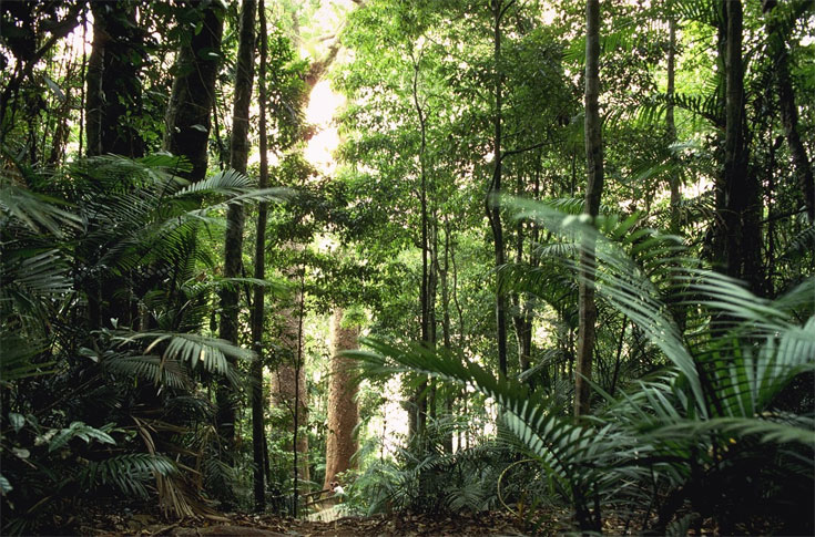Universal cancer vaccine developed the conservative papers for Australian rainforest