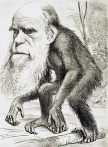 DarwinApe