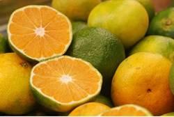 Israeli oranges