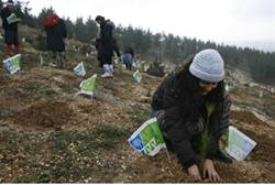 Planting Trees (illustrative)